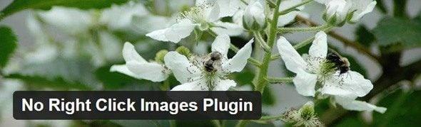 Évitez la copie et les plagieurs sous WordPress no right click images